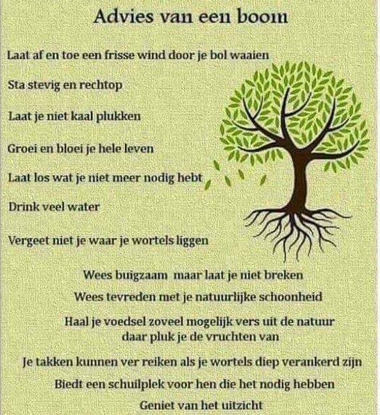 advies van een boom